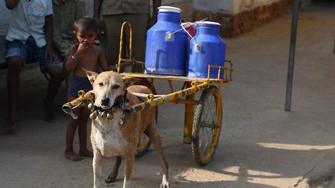 Adorable pooch delivers milk carrying on specially designed cart