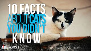 10 Facts About Cats You Need to Know Right Now - Video