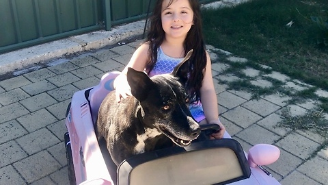Little Girl takes Dog for a Drive