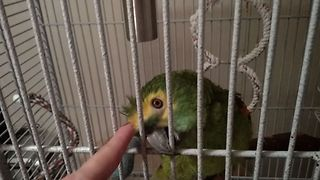 Smart Parrot Loves Being Petted By Owner, Tells Her - Video