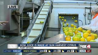 How orange juice is made at Sun Harvest Citrus