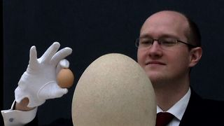 World's Biggest Egg - Video