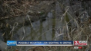 Possible Mountain Lion Sighting in Gretna