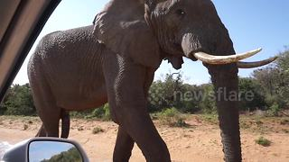 Elephant urinates in front of shocked tourists - Video