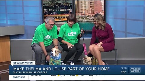 Rescues in Action Feb. 15 | Thelma and Louise