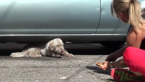 Homeless sick dog living under cars for 7 months - finally saved!