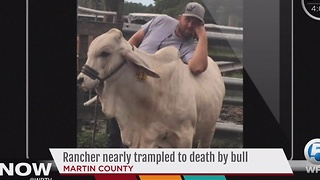 Rancher nearly trampled to death by bull - Video