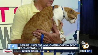 Gearing up for Howl-O-Ween adoption event