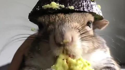 Squirrel Eating Avocado!! Look At This Hat