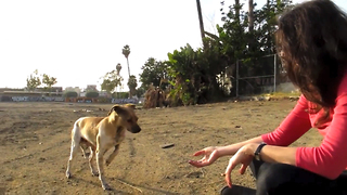An abused street dog's second chance - Ralph's rescue and rehab - Video