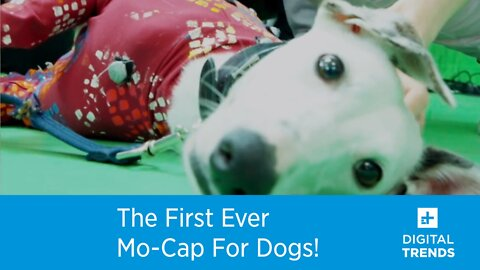 Check Out The First Mo-Cap Suit For Dogs!