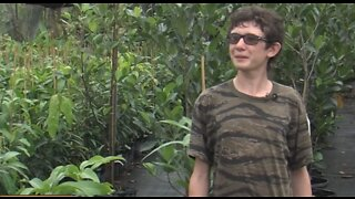 Teen on mission to get fruit trees to the Bahamas