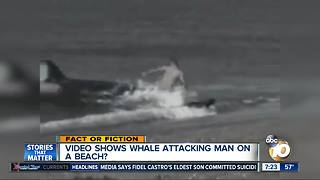 Video shows whale attacking man? - Video