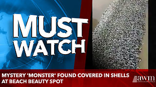 Mystery 'monster' found covered in shells at beach beauty spot - Video