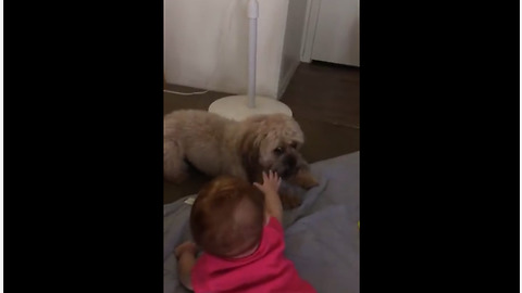 Super hyper dog plays with giggling baby