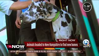 Animals to New Hampshire - Video