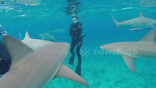 Brave Snorkelers Push Their Luck Swimming With Hungry Sharks