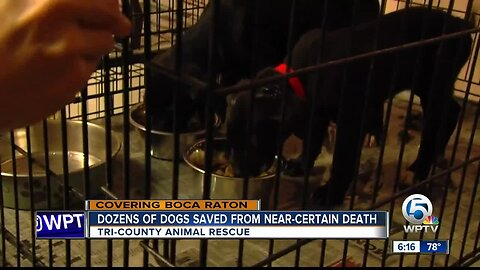 Dozens of dogs saved from near-certain death at Tri-County Animal Rescue