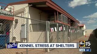 Shelters working to treat dogs with kennel stress - Video