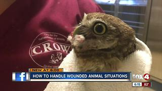 How to Handle Wild Wounded Animals - Video