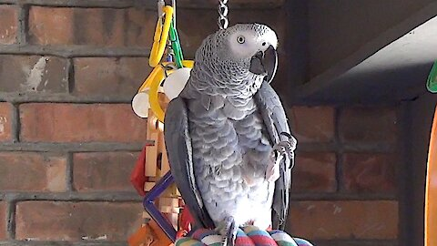 Talking parrot flawlessly imitates the sound of water