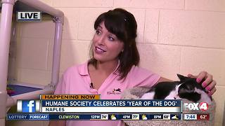 Humane Society Naples celebrates 'Year of the Dog' - 7:30am live report