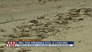 Red Tide continues along Pinellas Beaches