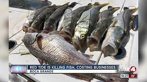 Red Tide hurting local businesses