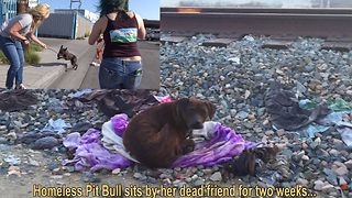 Homeless Pit Bull sits by her dead friend for two weeks... - Video
