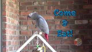 Einstein the Parrot hilariously encourages you to eat - Video