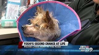 Yoshi the dog gets a second chance at life, after being hit by a car