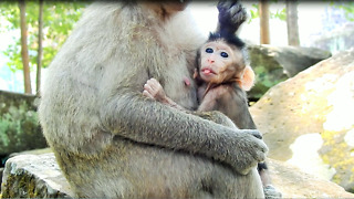 Small Monkey Always Bully Young Mom For Every Things - Video