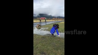 Girl takes spectacular fall in muddy puddle - Video