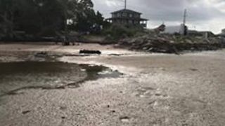 Strong Winds Cause Unusually Low Tide in North Carolina's Outer Banks - Video