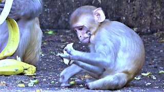 Baby monkey with extreme deformities manages well despite his challenges