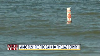 Winds push red tide on Pinellas County beaches
