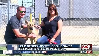 CHP officer adopts dog he saved - Video