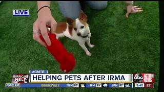 Pets abandoned after Irma needs fur-ever homes - Video