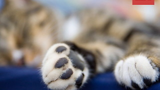 Kitten Jelly Bean Toes Are the Cutest