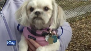 First dog exercise park opens in Green Bay - Video