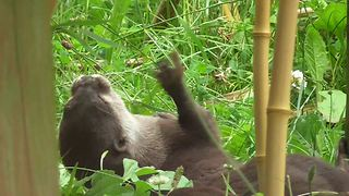 Otter displays incredible ball control skills - Video