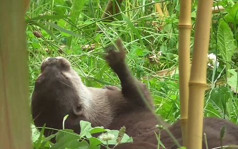 Otter displays incredible ball control skills