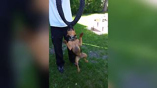 A Dog Bites On A Bicycle Tire And Spins Around In Circles - Video