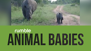 Compilation Of Baby Animals That Proves How Wonderful The Animal Kingdom Can Be