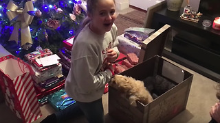 Cavapoo puppy christmas surprise  - Video