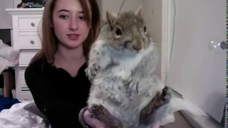 Rescued Squirrel Finds Loving Home - Video