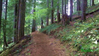 Treadmill Hike: Forest Walk with Encouraging Motivational Quotes to Lose Weight