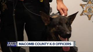 Macomb County gets three new K-9 officers - Video