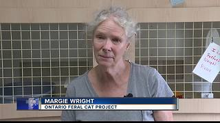 Feral cats poisoned in Ontario - Video