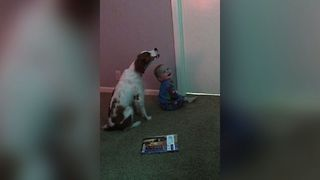 Baby Doggy Singing Duo - Video